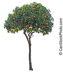 mandarynka, biały, drzewo, tło