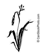 vector lily flower ink sketch graphics - a vector lily...