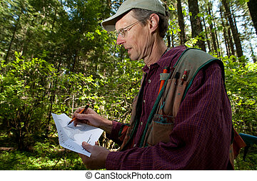 Forester in a Pacific Northwest forest - Forester reading a...