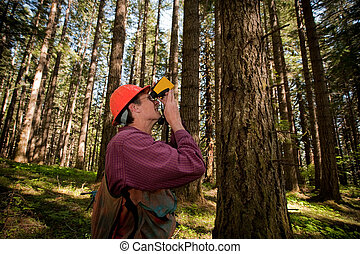 Forester in a Pacific Northwest forest - Forester using a...