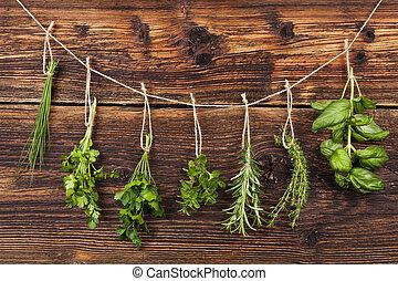 Culinary herbs. Aromatic herbs, basil, coriander, parsley,...