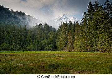 Mt Rainier - Meadow, forest, clouds and Mount Rainier