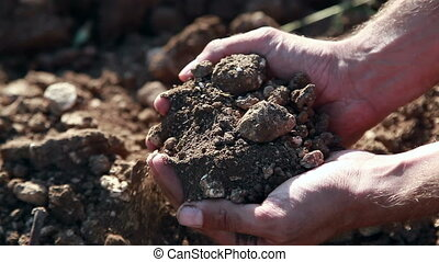 Stony Soil In Palms - Farmer Checking Stony Soil Through His...