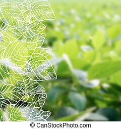 Hand drawn soy on blurred background - Vector illustration...