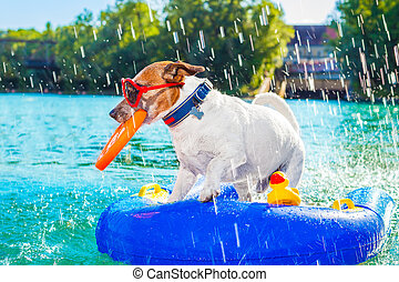 beach summer dog - jack russell dog sitting on an inflatable...
