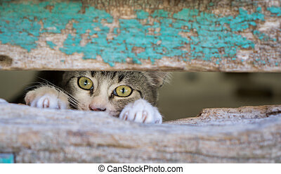Small kitty through old wooden door hole - Front view of...