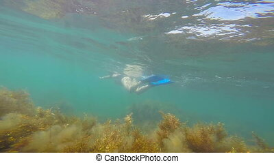 Underwater shot of female snorkeler swimming in water...