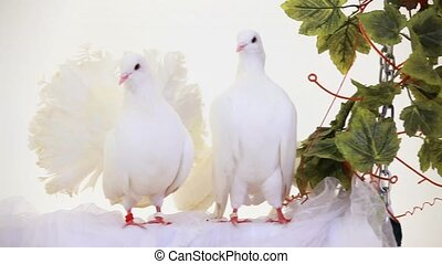 Pair Of White Birds - Two white doves sitting on a swing.