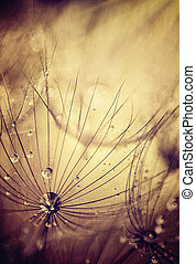 Dandelion flowers background, grunge abstract natural...