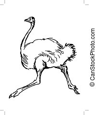 ostrich - hand drawn, sketch illustration of ostrich