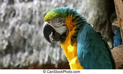 Beautiful parrot 01