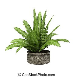 potted plant - green potted plant isolated on white...