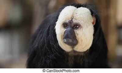 Monkey - Taken in the zoo