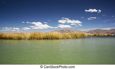 Reeds Passing By