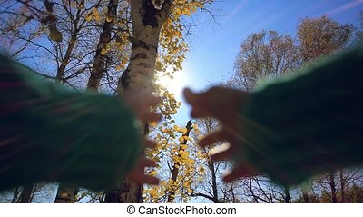 Hands touch the sun at autumn birch leaves on the sky...