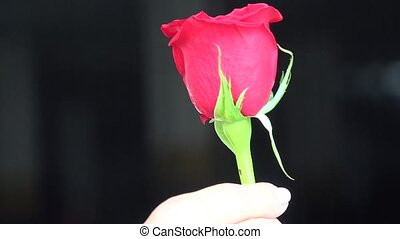 Flowers, Flowering Plants, Nature