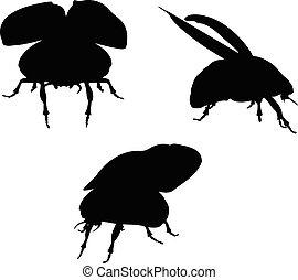 bug scarab early lift - Vector Image - bug scarab early lift...