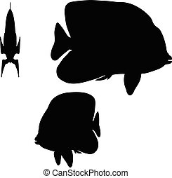 angelfish silhouette - Vector Image - angelfish silhouette...