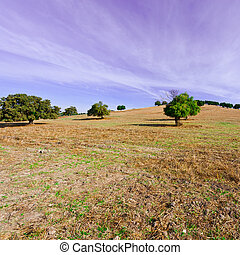 Pasture - Sloping Pasture of Spain in the Autumn
