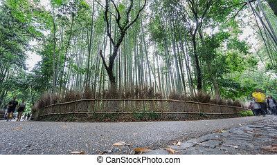 Bamboo forest in Arashiyama, Kyoto, Time Lapse - Time lapse...