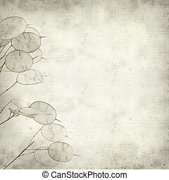 textured old paper background with Lunaria annua, silver...