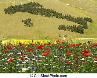 field of wildflowers and forest in shape of Italy at the...
