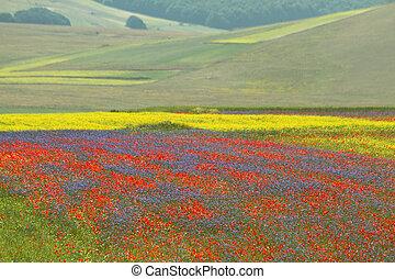 Multicolor, campos, com, selvagem, flores, ligado, piano,...