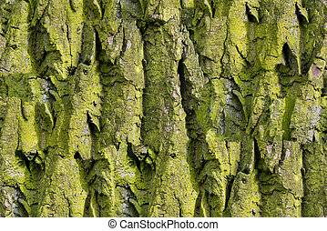 Bark of tree Seamless Tileable Texture - Green Bark of tree...