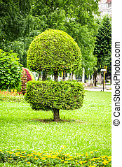 landscape design in park. trimmed tree - landscape design in...