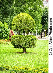 landscape design in park trimmed tree - landscape design in...