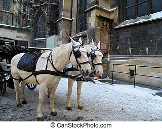 detail of white horses in vienna - detail of two white...