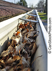 Leaves in rain gutter. - Home maintenance: Fall leaves in...