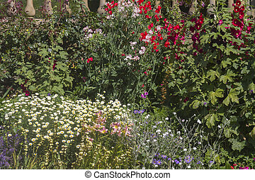 Herbaceous flower bed - A beautiful close-up shot of a...