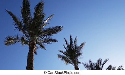 palm trees in the wind over a blue sky