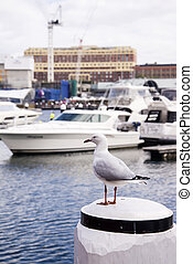 Seagull in the harbour