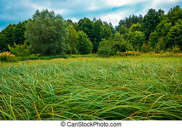 Green sedge on a bog in the forest