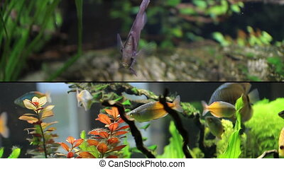 medium shot of different kind of fish - multiscreen -...