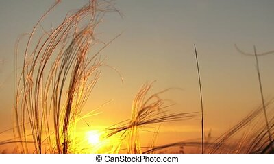 Sunshine At Sunset