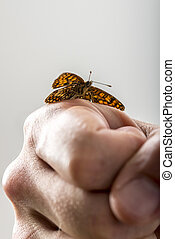Closeup of a man with a butterfly with open wings on his clenched hand