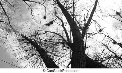 Silhouette of flying crows - Mystic autumn scene, silhouette...