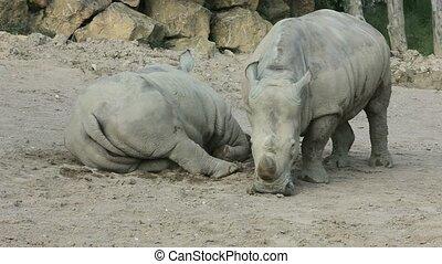 Rhinoceros - Taken with a tripod