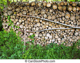 Wood texture background have many logs that cut from big...