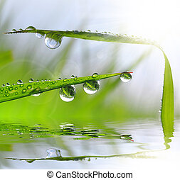 Fresh green grass with dew drops closeup Nature Background
