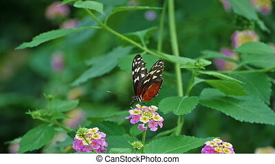 HD - Butterfly pollinating flowers