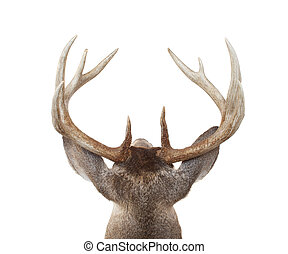 Whitetail Deer Head from Above and Behind - Looing at a...