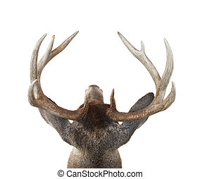 Whitetail Deer Buck Head From Above - View of a Whitetail...