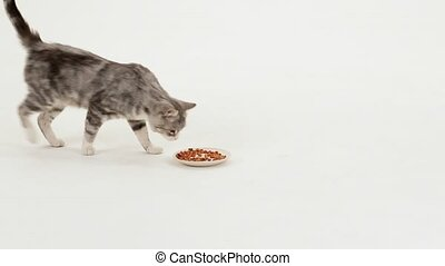 Grey tabby cat eats dry food - Cat on the left side comes to...