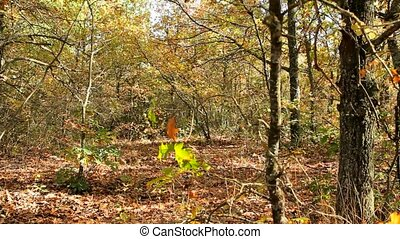 Woman Walks In The Park - A woman walks in the autumn woods...