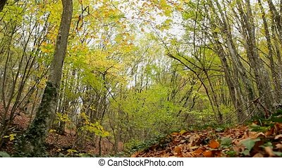 Wild Autumn Forest - Beautiful autumn forest with fallen...