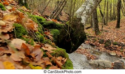 Wild Forest Area - Beautiful autumn forest with fallen...